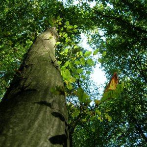 Sarah's Wood